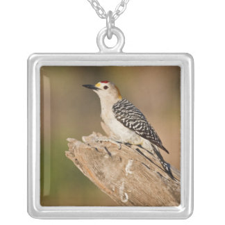 Starr Co. ranch, south Texas, USA, spring, Square Pendant Necklace