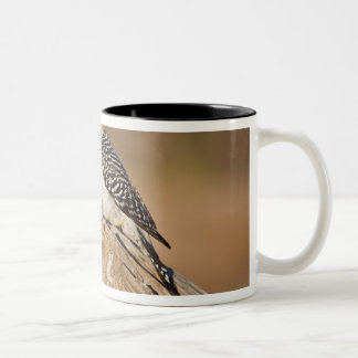 Starr Co. ranch, south Texas, USA, spring, Two-Tone Coffee Mug
