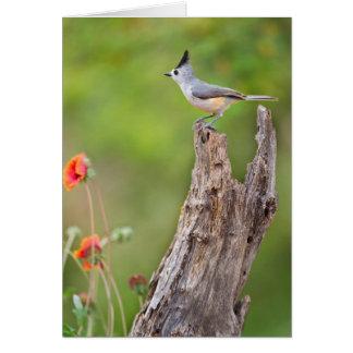 Starr County, Texas. Black-crested Titmouse Card
