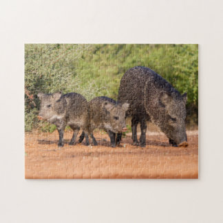 Starr County, Texas. Collared Peccary 1 Puzzles