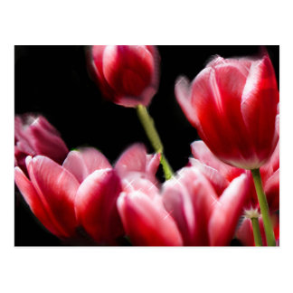 STARRED PINK TULIPS POSTCARD