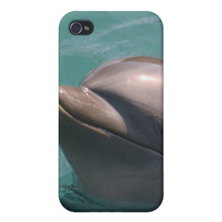 Starring a Dolphin iPhone Case iPhone 4 Cover
