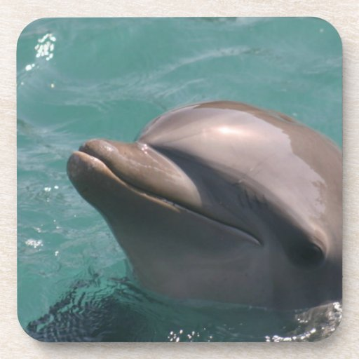 Starring a Dolphin Set of Six Coasters