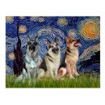 Starry Night - 3 German Shepherds Postcard