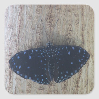 Starry Night Butterfly Square Sticker