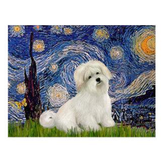 Starry Night - Coton de Tulear 7 Postcard