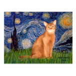 Starry Night - Red Abyssinian Postcard