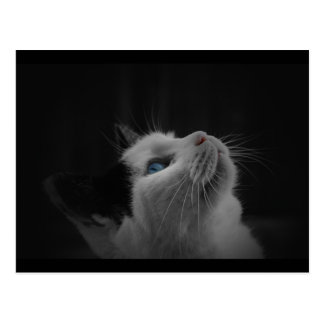 Starry night sky black & white cat with blue eyes postcard