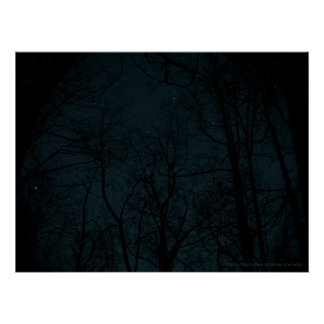 Starry Night Trees poster