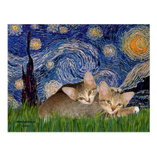Starry Night - Two Tabby Kittens Postcard
