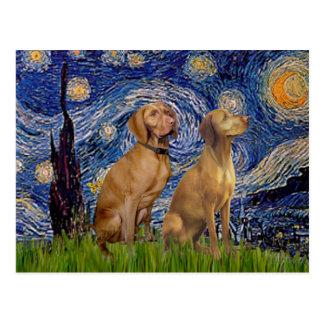 Starry Night - Two Vizslas Postcard