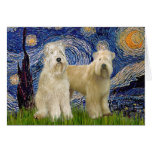 Starry Night - Wheaten Terriers (two) Cards