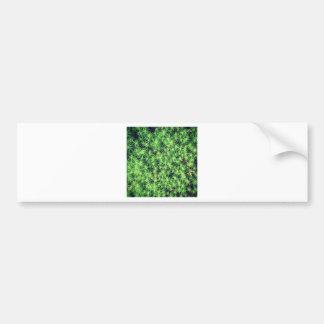 Starry starry moss bumper sticker