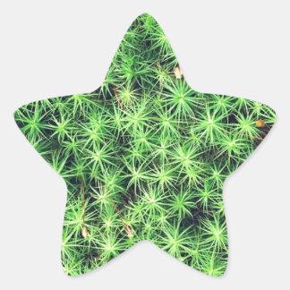 Starry starry moss star sticker