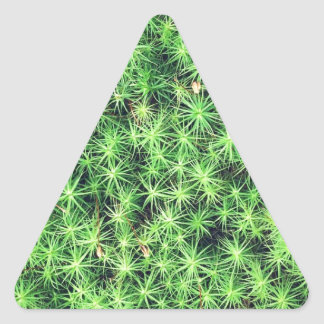 Starry starry moss triangle sticker