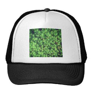 Starry starry moss trucker hat