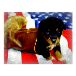 Stars Spangled Puppy Post Card