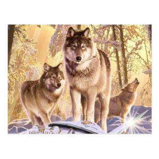 """Stars Under Snow"" Postcard"