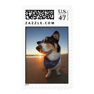 StarStruck en la playa Timbre Postal