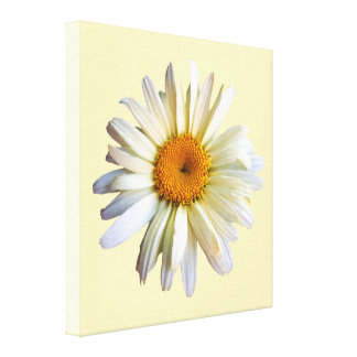 STARTING UNDER $100 - Daisy Looking Up Canvas Print