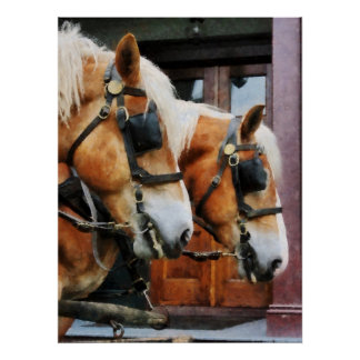 STARTING UNDER $20 - Clydesdale Closeup Poster