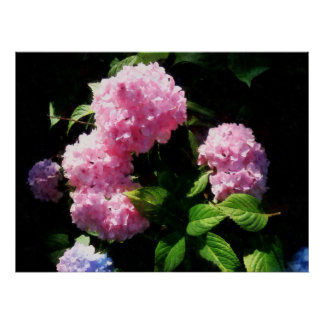 STARTING UNDER $20 - Hydrangea in Sunshine Poster