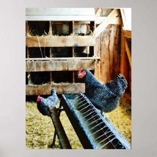 STARTING UNDER $20 - In the Chicken Coop Print