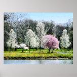 STARTING UNDER $20 - Line of Flowering Trees Poster