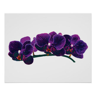 STARTING UNDER $20 - Purple Phalaenopsis Orchids Poster