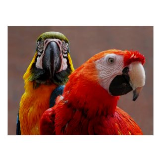 STARTING UNDER $20 - Two Parrots Closeup Print