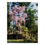 STARTING UNDER $20 - Weeping Cherry Poster