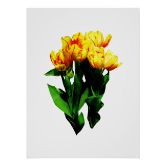 STARTING UNDER $20 -Yellow Tulips With Red Stripes Poster