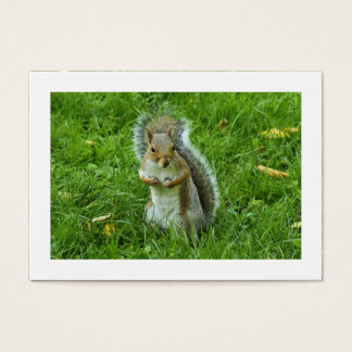 Startled Grey Squirrel (Bordered) Business Card