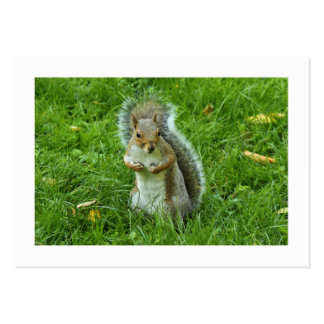 Startled Grey Squirrel (Bordered) Large Business Card