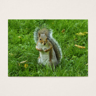 Startled Grey Squirrel, Bute Park, Cardiff Business Card