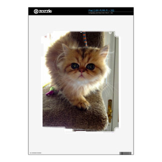 Startled Persian Kitten Decals For iPad 2