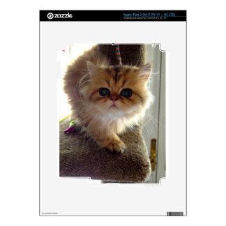 Startled Persian Kitten iPad 3 Skins