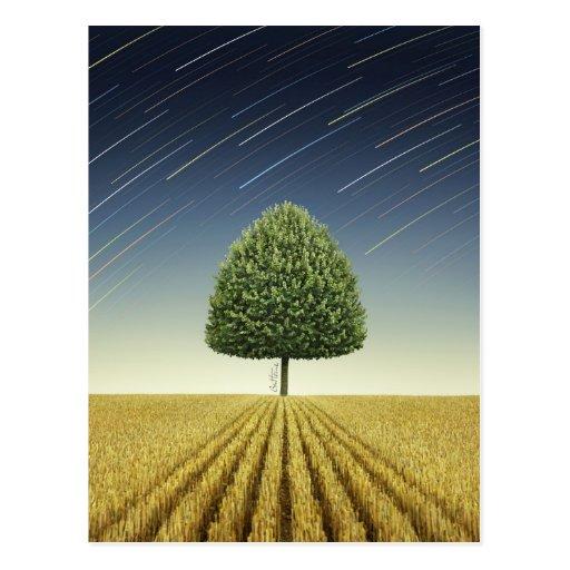 Startrail y árbol postal