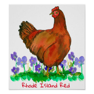 state bird of rhode island gifts on zazzle