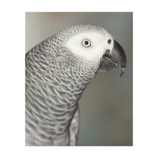 Stately African Grey Parrot Canvas Print