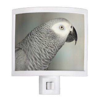 Stately African Grey Parrot Nite Light