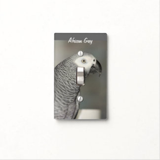 Stately African Grey Parrot Switch Plate Covers