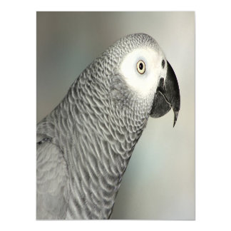 Stately African Grey Parrot Magnetic Card