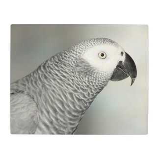 Stately African Grey Parrot Metal Photo Print