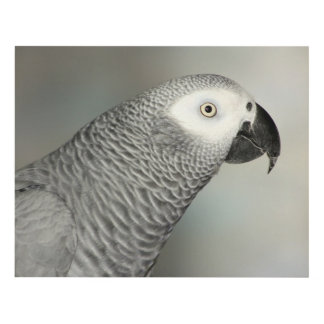 Stately African Grey Parrot Panel Wall Art