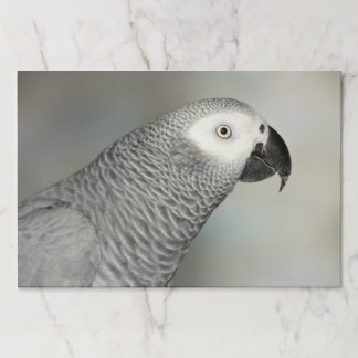 Stately African Grey Parrot Paper Placemat