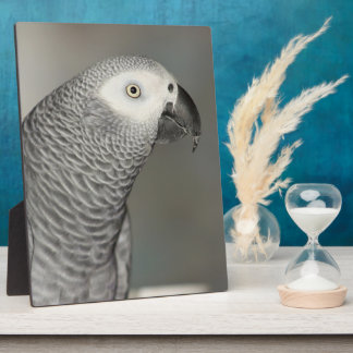 Stately African Grey Parrot Plaque