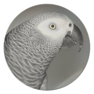 Stately African Grey Parrot Party Plate