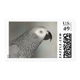 Stately African Grey Parrot Postage