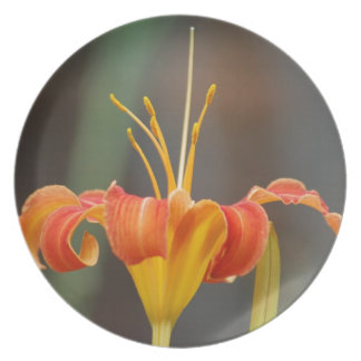 Stately Day Lily and meaning Party Plates